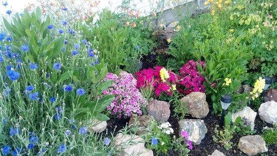 Church's Blue Pine Motel: Beautiful flowers!