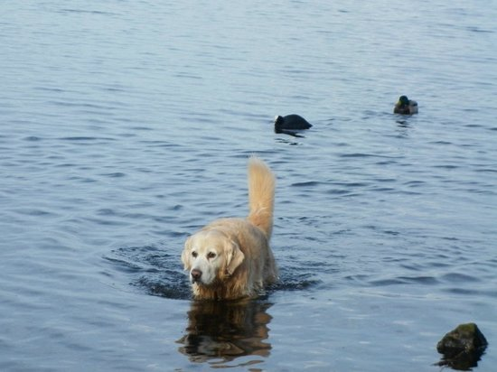 Alster Lakes: A dog in the lake