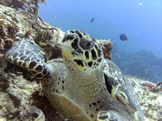 Diving Adventures: Getting up close and personal with a green sea turtle