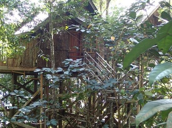 Permai Rainforest Resort: tree house