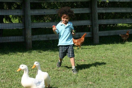 Heartland Country Resort: Petting Zoo Fun