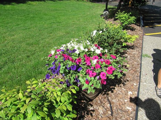 Quality Inn & Suites: Flowers on hotel grounds