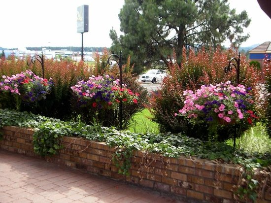 Quality Inn & Suites: More flowers on hotel grounds