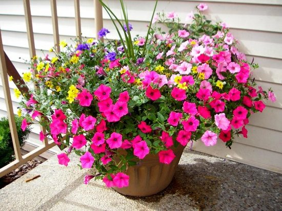 Quality Inn & Suites: Lovely potted flowers on hotel grounds