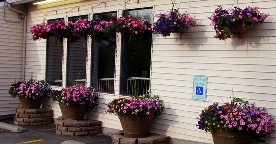 Quality Inn & Suites: Beautiful floral baskets everywhere on grounds