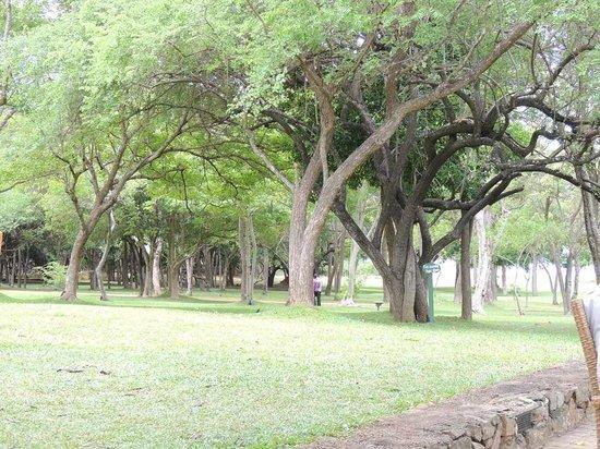 Amaya Lake: Garden
