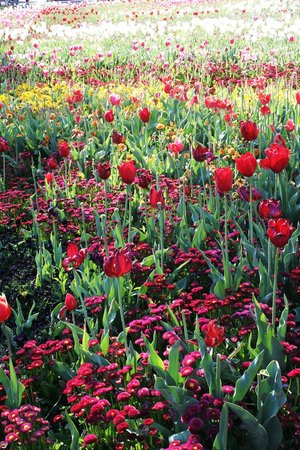 Floriade: Flowers