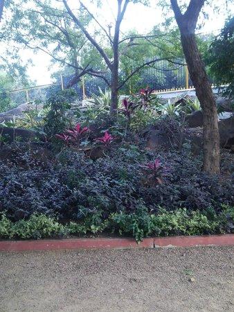 Vivanta by Taj Begumpet: Green