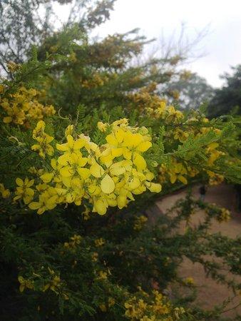 Vivanta by Taj Begumpet: Yellow