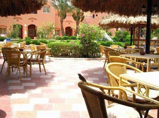 Jaz Makadi Oasis Resort and Club: Бар у бассейна
