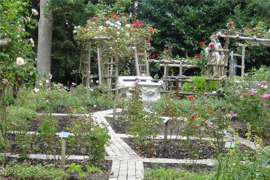 Parc Floral et Tropical de la Court d'Aron : Roseraie décevante
