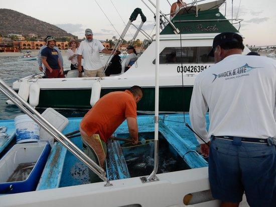 Martin Verdugo's Beach Resort: bait for fishing