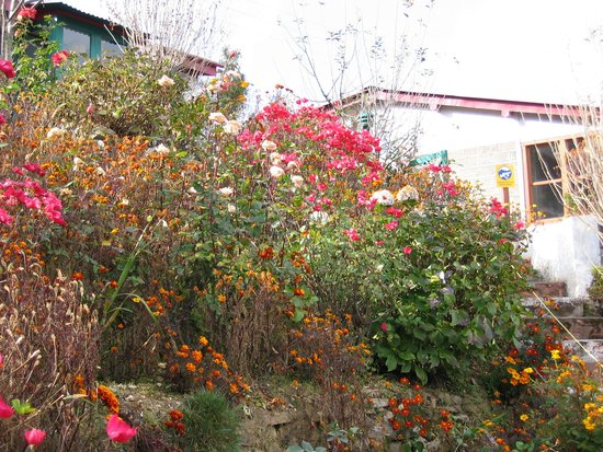 Mystic Mukteshwar Lodge: Some flowers at Mystic