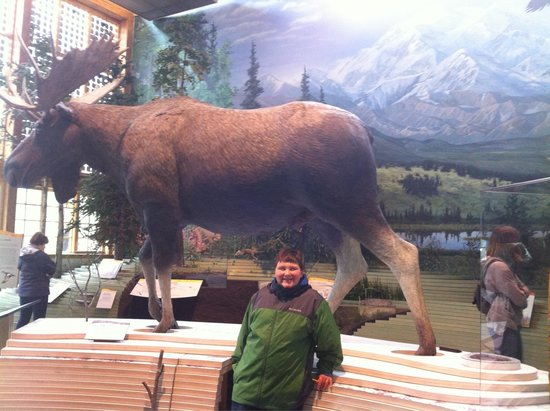Denali Visitor Center : Moose display lower level