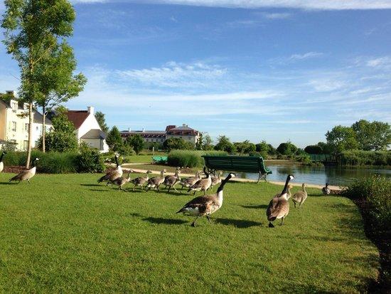 Marriott's Village d'lle-de-France: 敷地内の池には鴨が