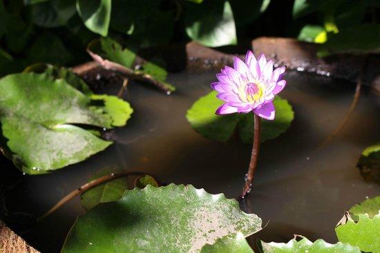 Ashoka Tree Resort Ubud: gardens