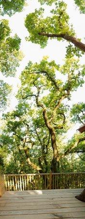 terrasse ch teaux dans les arbres bergerac resmi tripadvisor. Black Bedroom Furniture Sets. Home Design Ideas