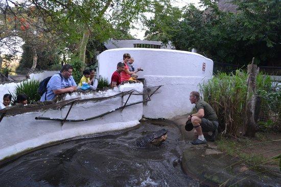 Crocodile Creek : Fearless...