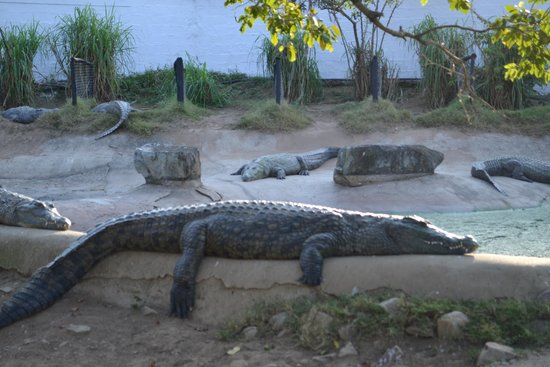 Crocodile Creek : Chilling...