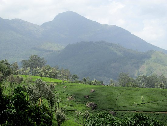 Estate Residency: view from the homestay