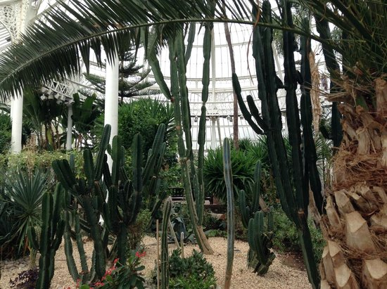 People's Palace and Winter Gardens : Cactus