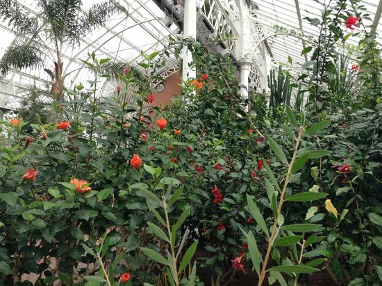People's Palace and Winter Gardens: Flowers