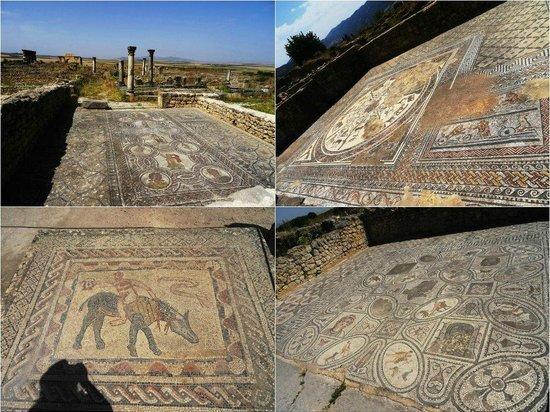 Site archéologique de Volubilis : Мозайка