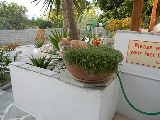 Cyclades Hotel and Studios: Rico the cat enjoying a plant-pot siesta