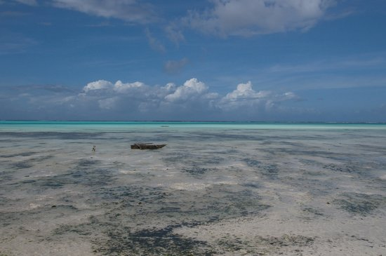 Coral Rock Zanzibar: Amazing colours