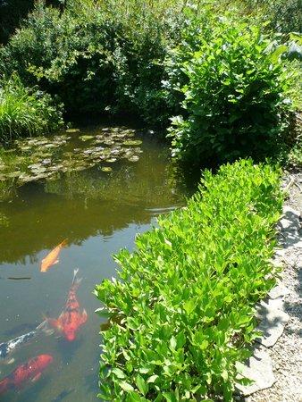 Magnifique saule pleureur picture of les jardins - Les jardins aquatiques saint didier sur chalaronne ...