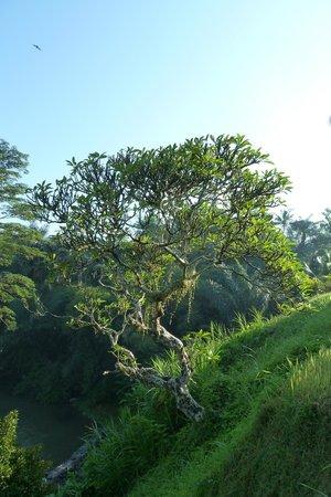 Villa Semana: Vue Jardin