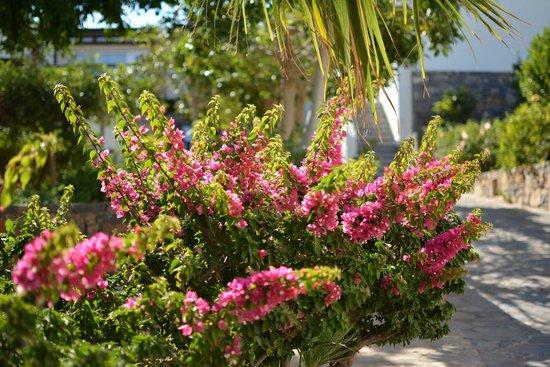 Dessole Mirabello Beach & Village : Hotelgelände