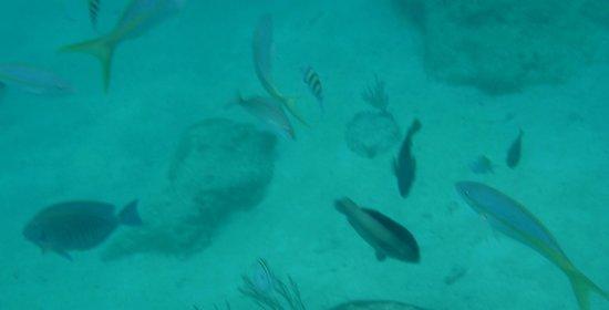 Castillo Tours: Great Marine Life