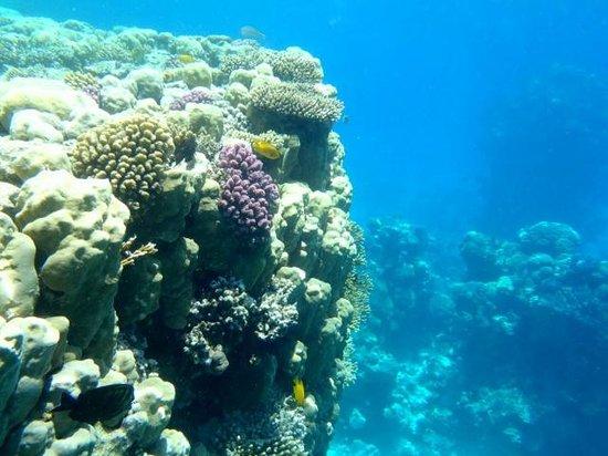 Sharm Cliff Resort: Coral beach, under the sea