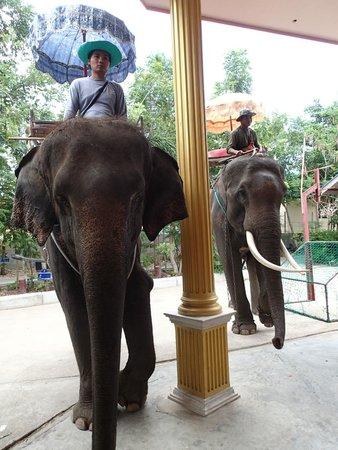 Hutsadin Elephant Foundation : Fed the elephants after the ride