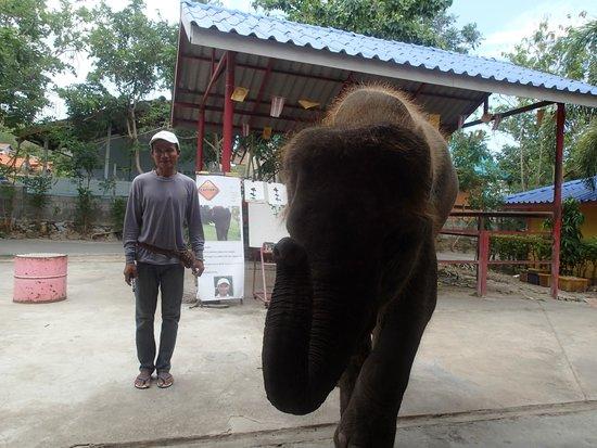 Hutsadin Elephant Foundation : Baby elephant show