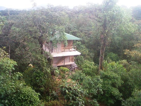 San Jorge de Milpe Eco-Lodge Orchid & Bird Reserve : View from Forest Lodge to Bungalow Suites