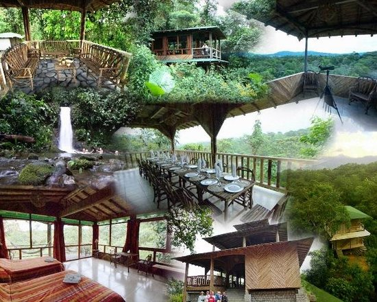 San Jorge de Milpe Eco-Lodge Orchid & Bird Reserve : San Jorge de Milpe NEW Deluxe Forest Lodge
