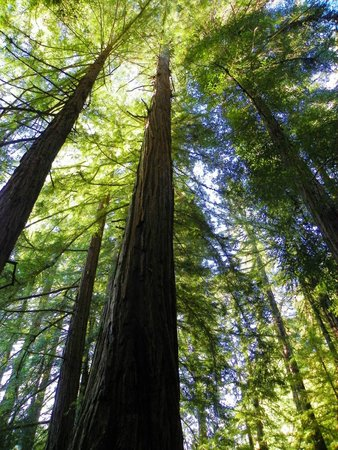 Samuel P. Taylor State Park: Among the Redwoods!
