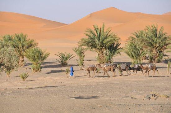 Dar El Janoub: Sicht auf die Dünen