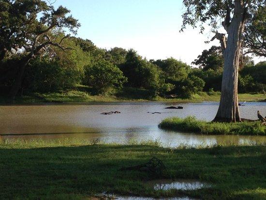 Yala National Park: Buffles