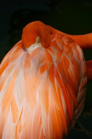 Iberostar Cozumel : Flamingos by the lobby