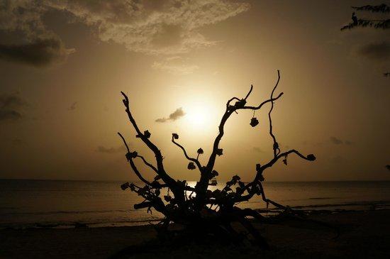 Iberostar Cozumel : Sunset