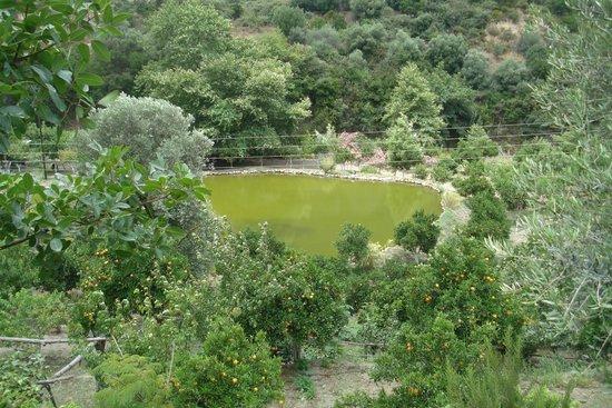 Vergangenes gut integriert - Picture of Botanical Park ...