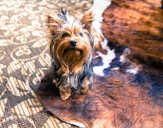 The Hotel Telluride : Pet friendly in every way!