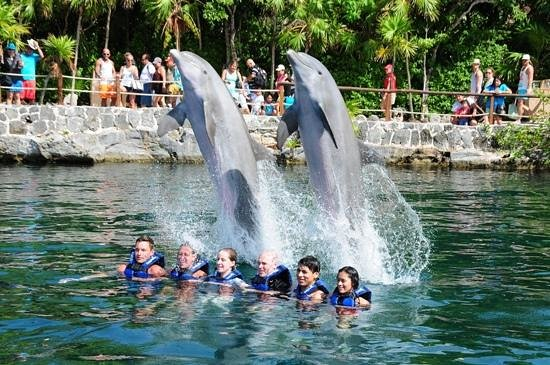 Hotel Riu Palace Mexico: swimming with dolphins at Xel-Ha
