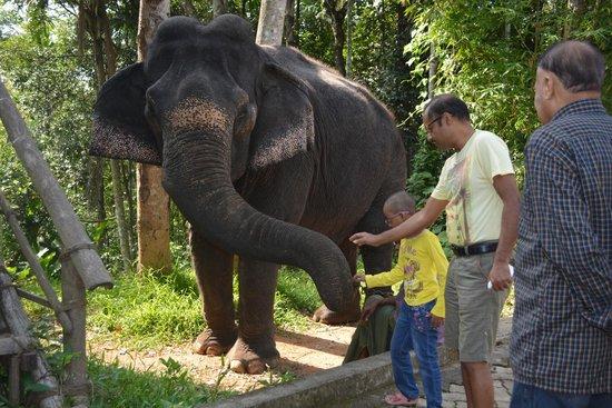 Blooms Green Farm : elephant safari...