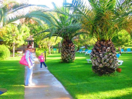 Turquoise Resort Hotel & Spa: Зеленая территория