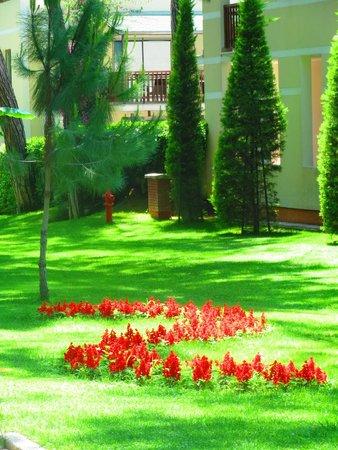 Turquoise Resort Hotel & Spa: кругом трава