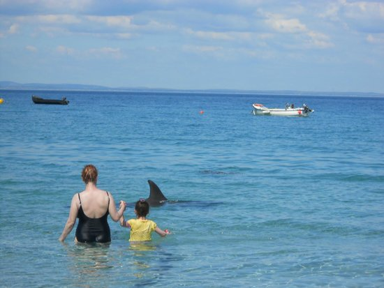Bru Radharc na Mara Hostel: You may find a dolphin swimming with you on the beach